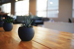 A small aloe vera plant in a stylish black bowl.
